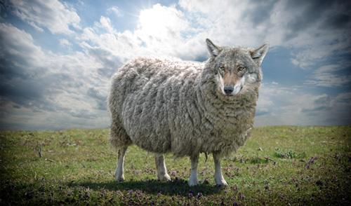 ذئب في ثوب حمل