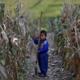 نشطاء مسيحيون: ضحايا فيروس كورونا في كوريا الشمالية يتضورون جوعا في معسكرات الحجر الصحي