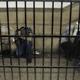 في مصر.. حكم نهائي بإعدام 17 متهمًا أُدينوا باستهداف كنائس