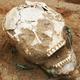 ديلي إكسبريس: مقبرة مسيحية عمرها 1000عام في بولندا تفاجىء العلماء