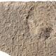 علماء الآثار يكتشفون نقشًا عمره 1500 عام كتب عليه المسيح، المولود من مريم في شمال إسرائيل