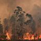 رئيس أساقفة سيدني يدعو للصلاة بعد أسابيع من الحرائق المدمرة في أستراليا