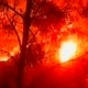 كارثة في الكرمل: حريق هائل وعشرات القتلى والجرحى