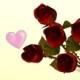 عيد حب 365 يومًا بالسنة!